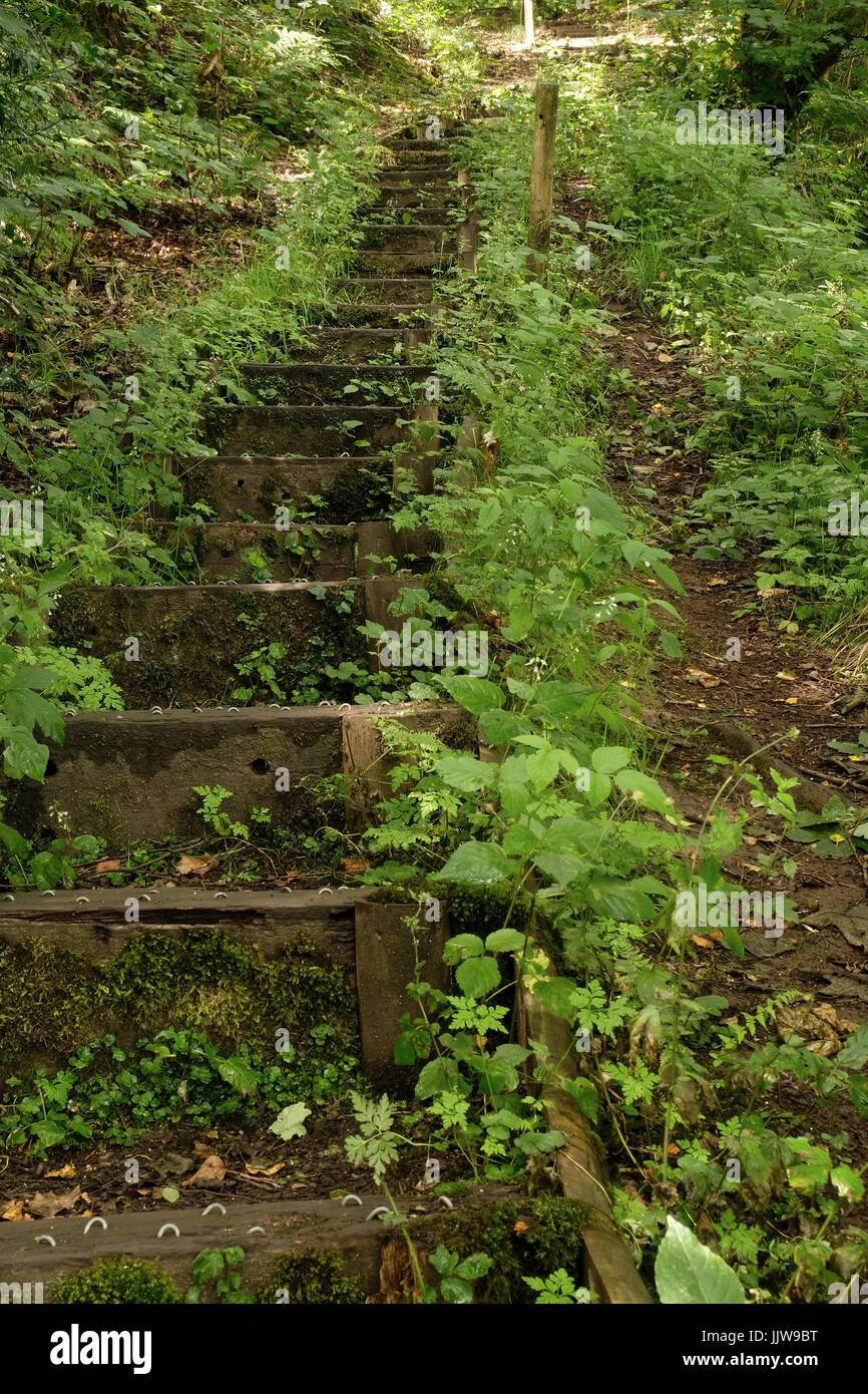 Wooden steps in Consall Nature Park - Stock Image