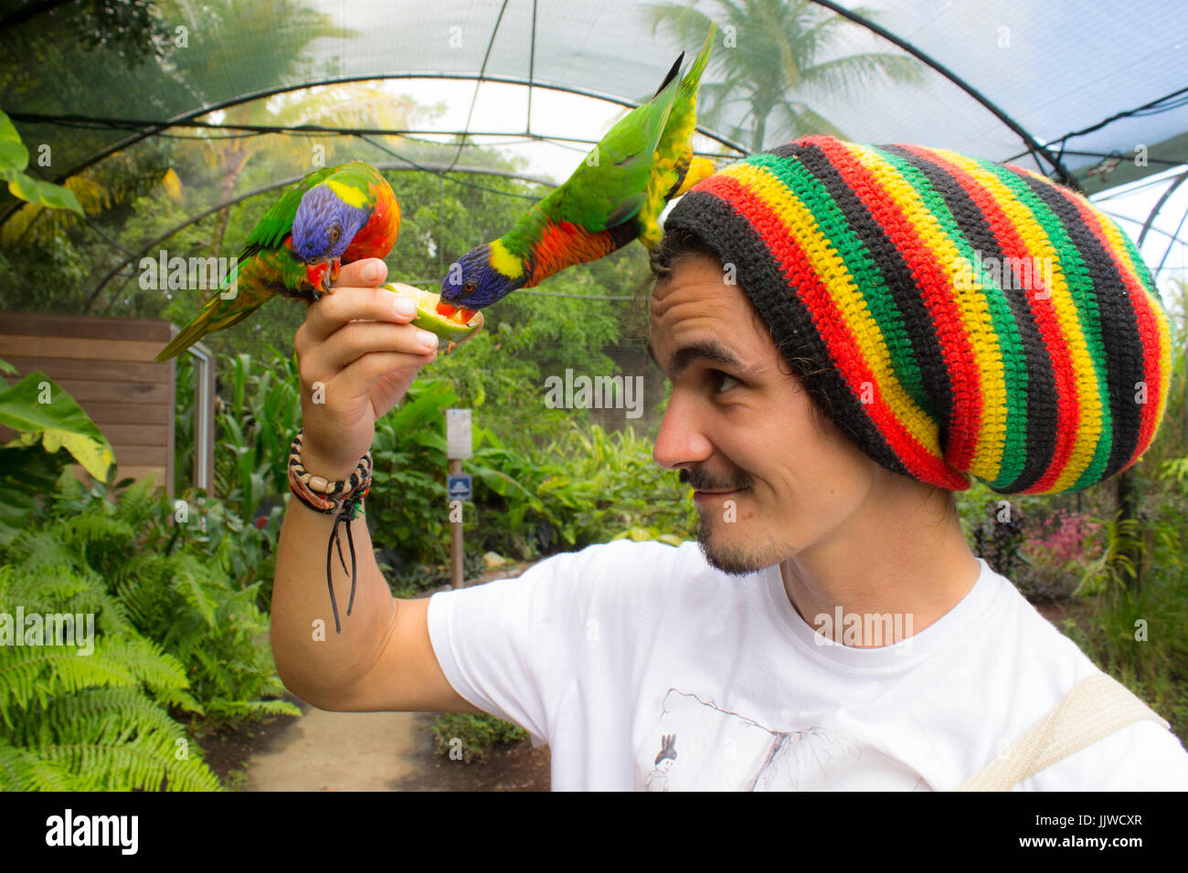 A man holding two Rainbow lorikeets - Stock Image