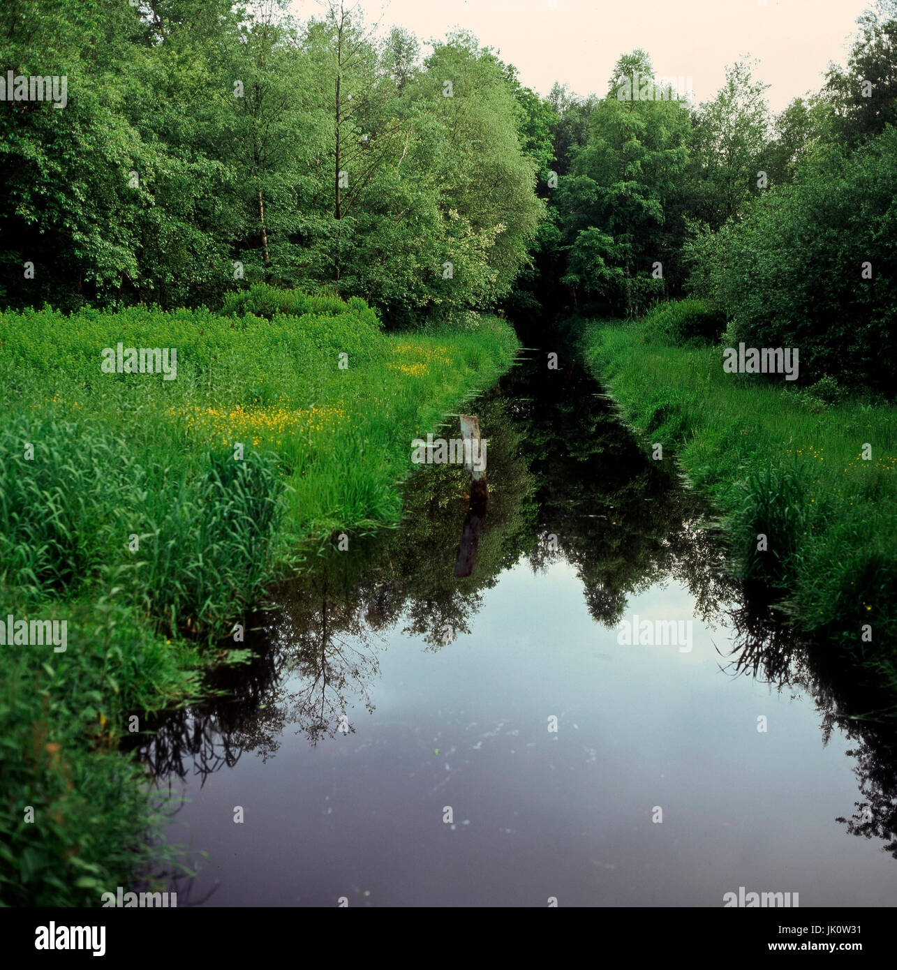 bank growth in moorgraben in the spring. plants and trees in jump alongside a ditch in the moorland., uferbewuchs - Stock Image