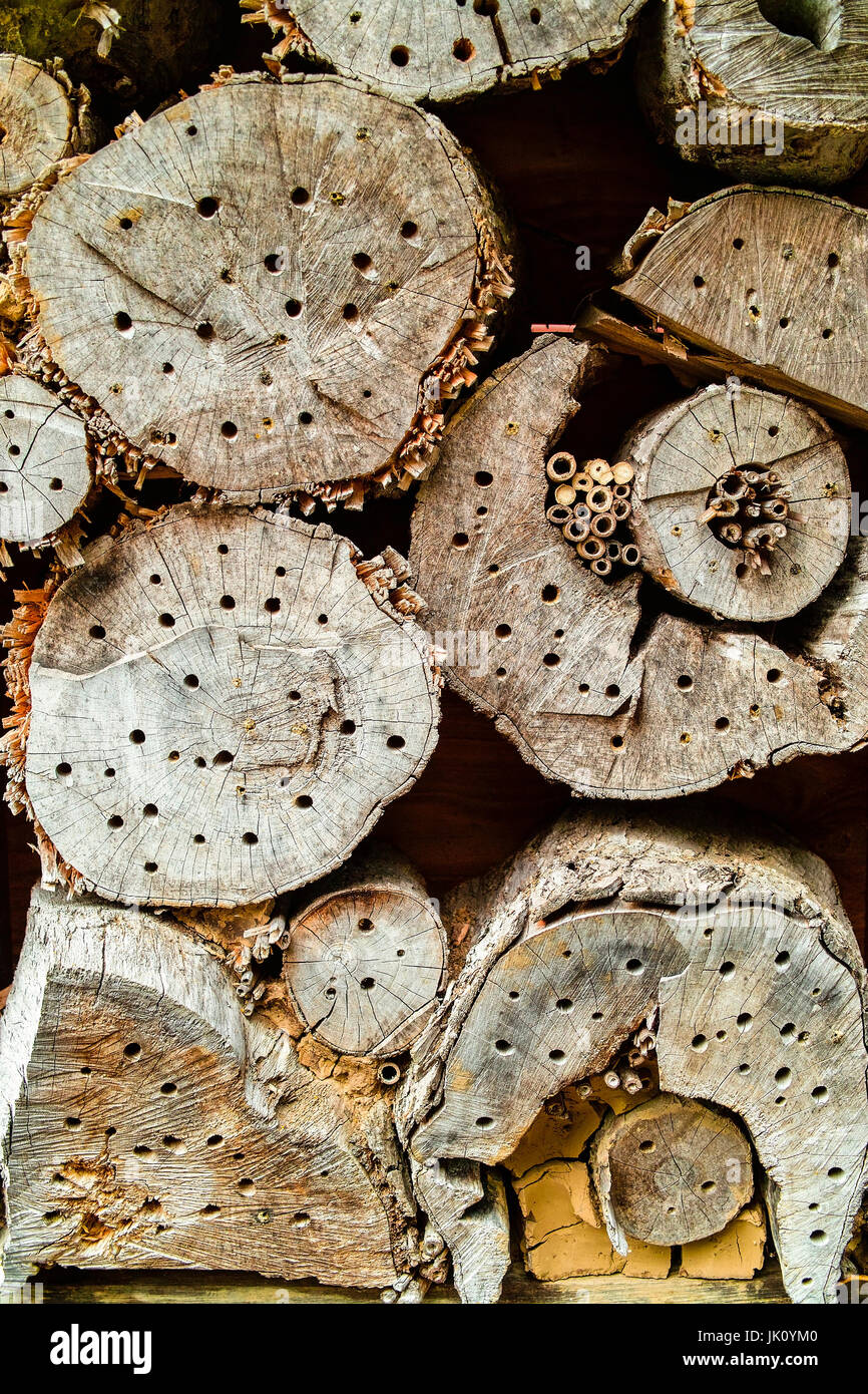 dead wood with bores as legehilfe lead insects. dead wood with holes, drilled for insects., totholz mit bohrloechern - Stock Image