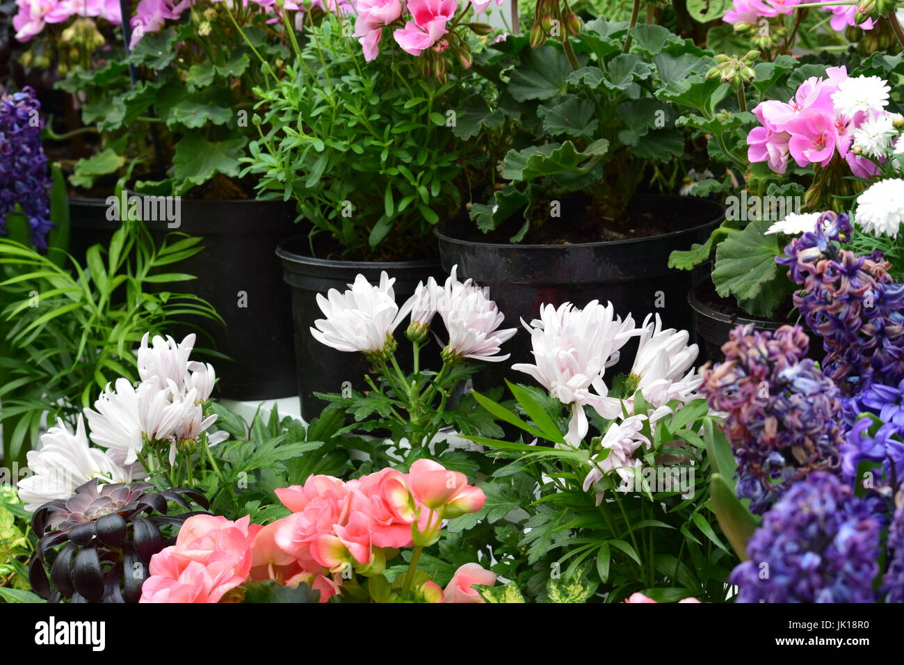 Hot house flowers stock photo 149390276 alamy hot house flowers mightylinksfo
