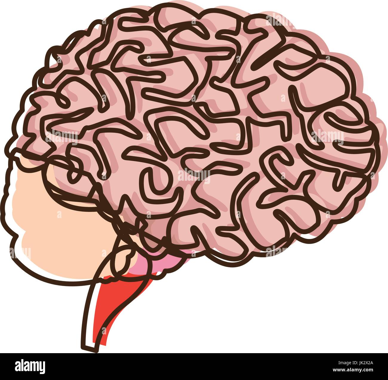 human brain for medical healthy memory anatomy design Stock Vector ...