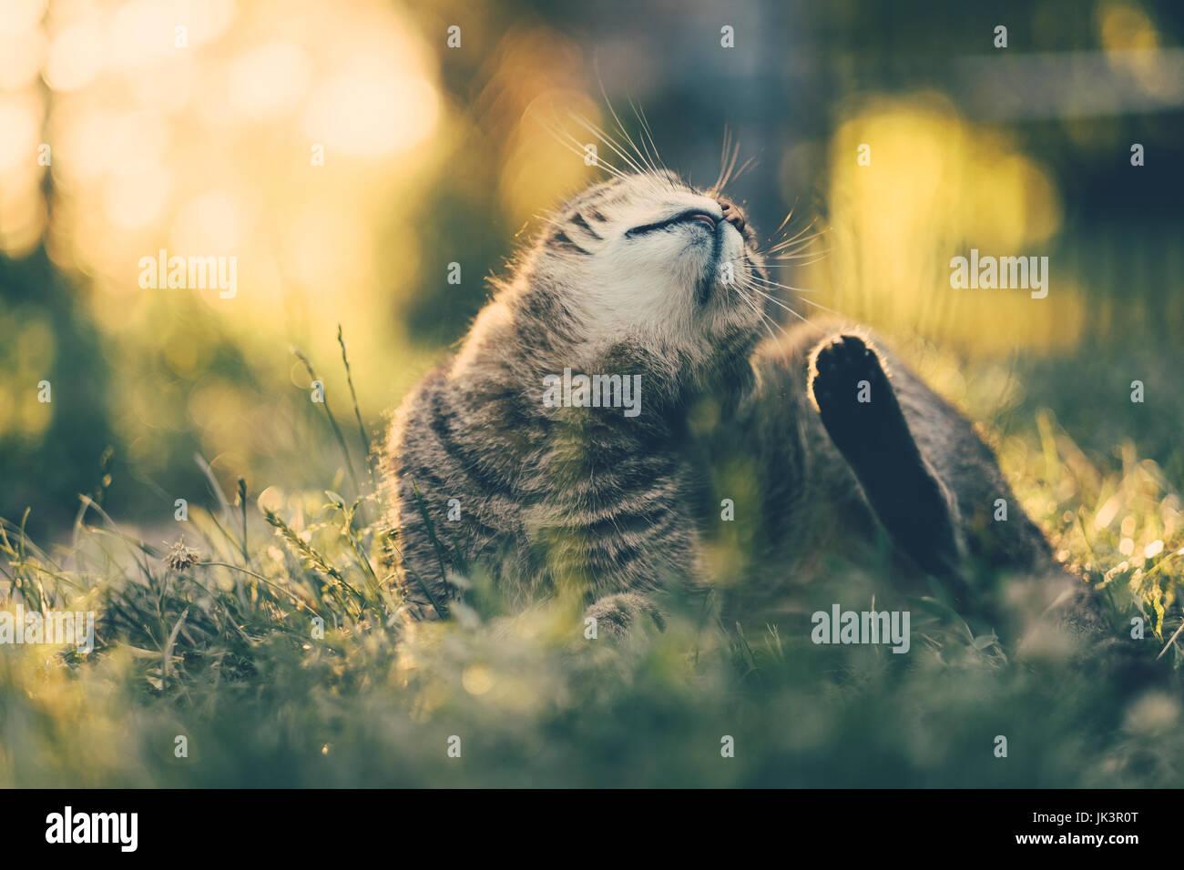 Flea cat - Stock Image