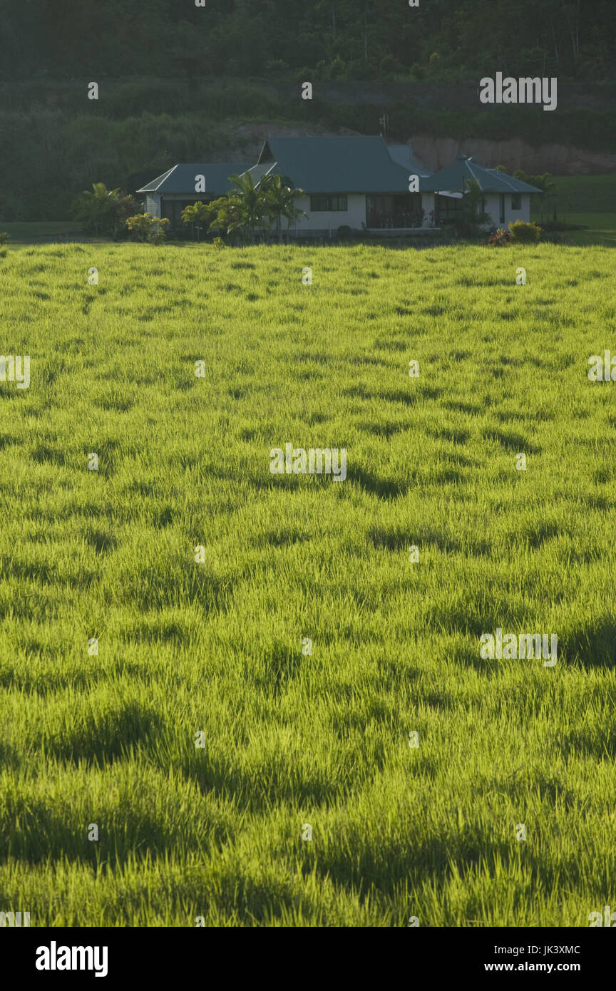 Australia, Queensland, North Coast, Babinda, Green field and farmhouse, Stock Photo