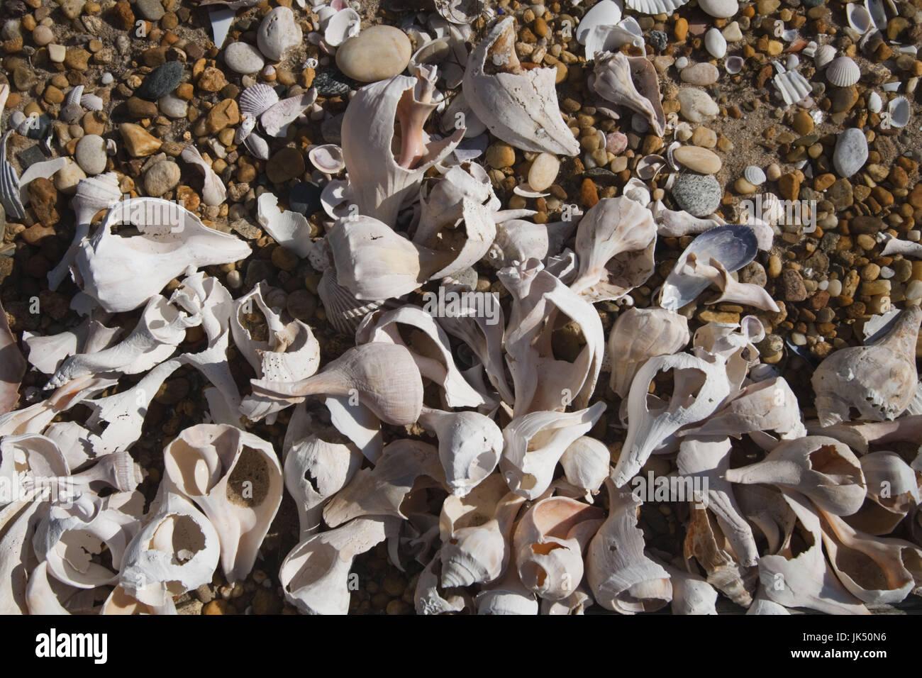 USA, New York, Long Island, The Hamptons, Amagansett, beach shells - Stock Image