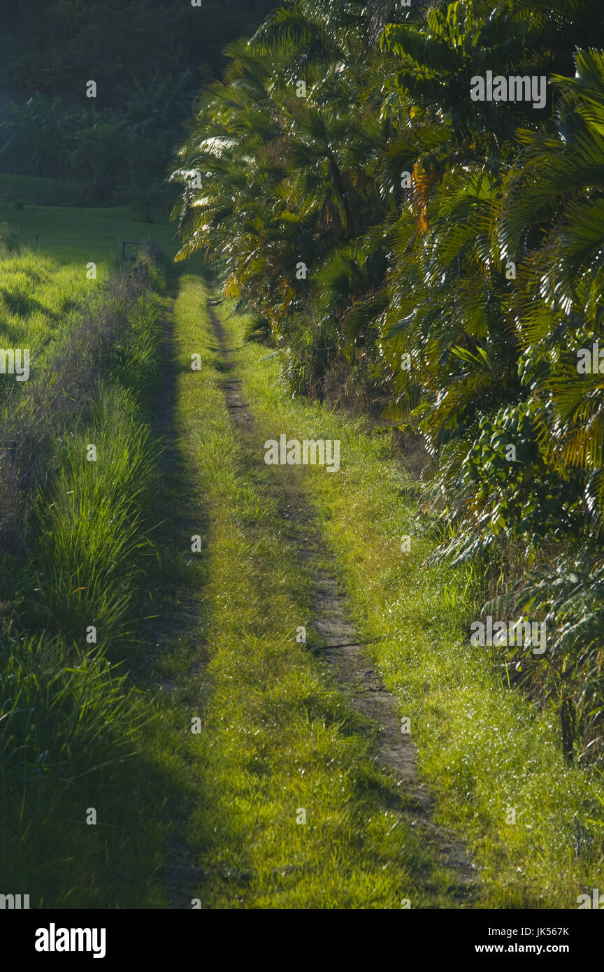 Australia, Queensland, North Coast, Babinda, Backcountry Road, Stock Photo