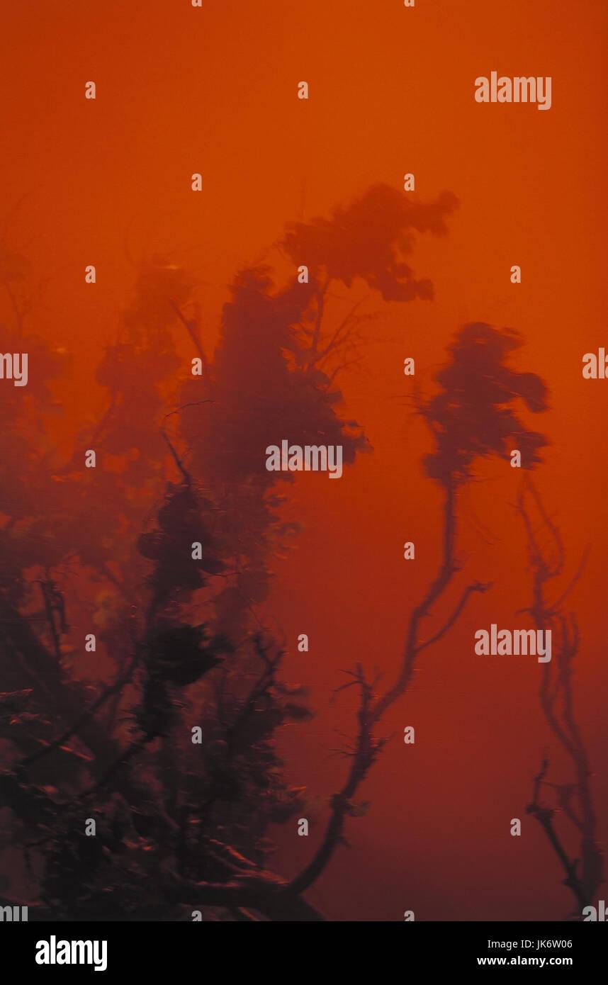 Waldbrand   Wald, brennen, Feuer, Brand, Flammen, Zerstörung, zerstören, heiß, Hitze, Umwelt, Katastrophe, - Stock Image