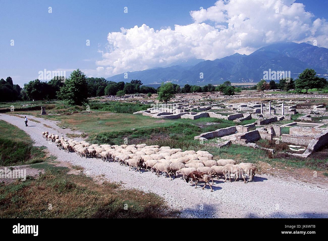 Griechenland, Makedonien, Dion, Ausgrabungsstätte, Ruine, Isis-Heiligtum, Schafhirte, Schafherde Zentralmakedonien, Stock Photo