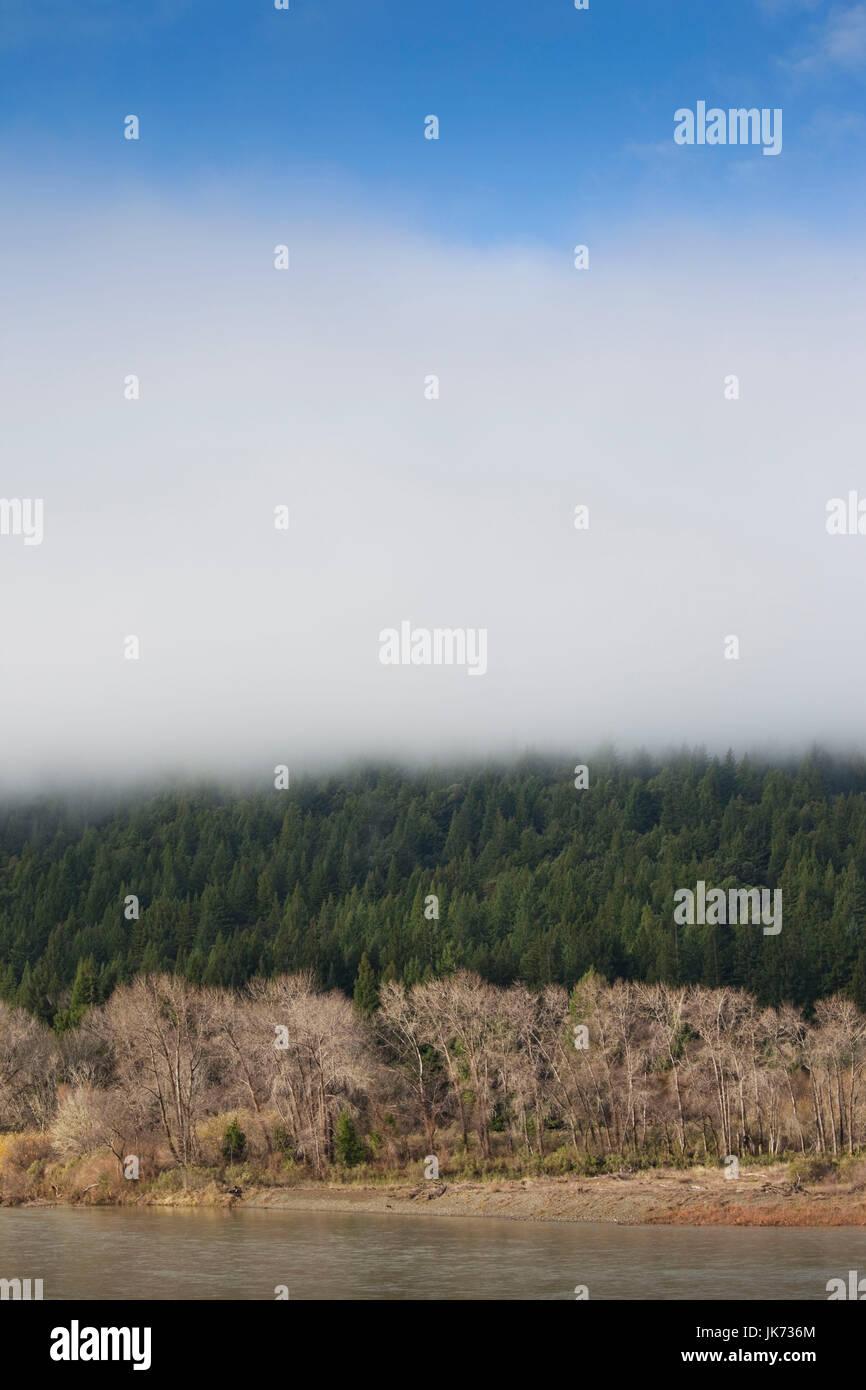 USA, California, Northern California, North Coast, Miranda, morning mist on the Avenue of the Giants, Humbolt Redwoods - Stock Image