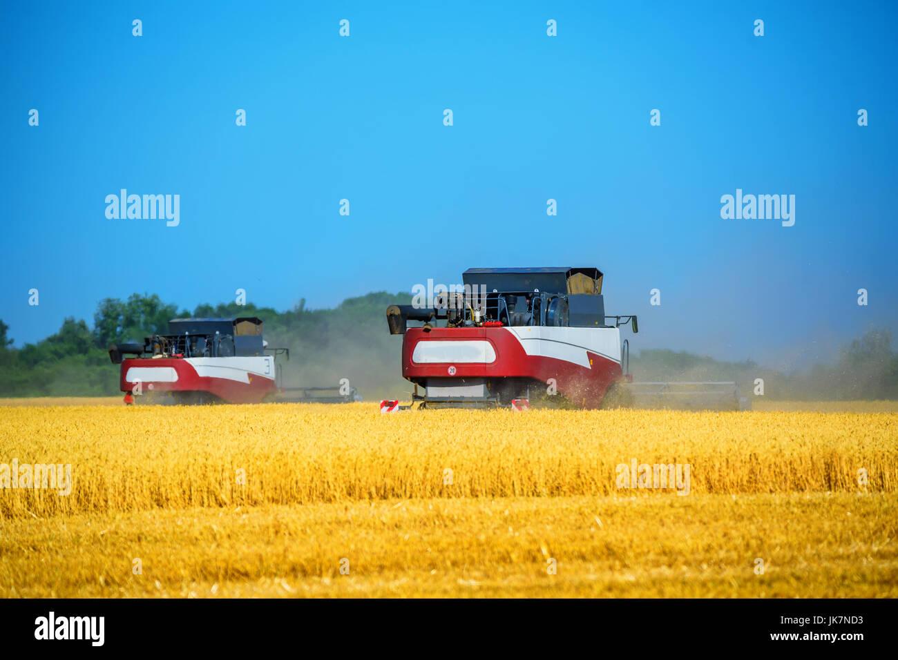 Grain harvesting combines work in wheat field - Stock Image