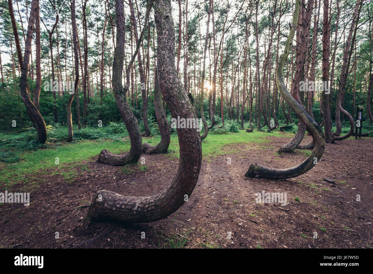 So Called Crooked Forest Polish Krzywy Las With Oddly Shaped Pine Stock Photo Alamy,Funny Animal Pictures With Captions Clean