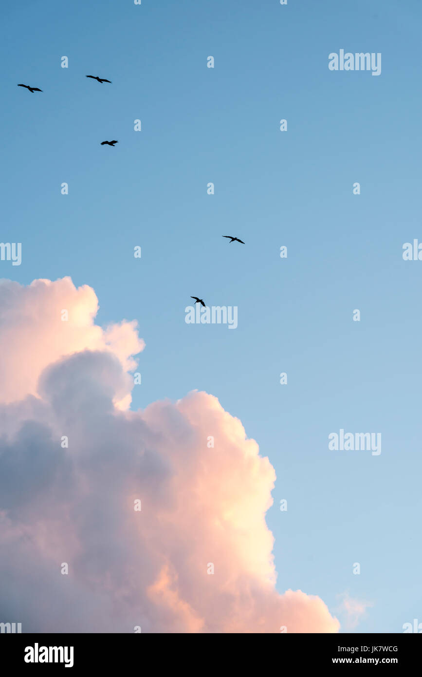 Birds ride the thermal draft after a storm - Stock Image
