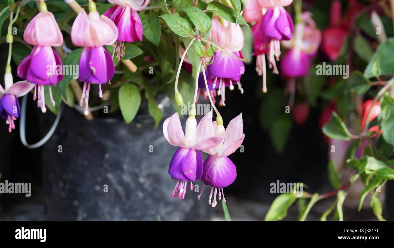 Un jardín de flores, repleto diferentes colores que le dan al mundo belleza, una flor es única por sus tonalidades, Stock Photo