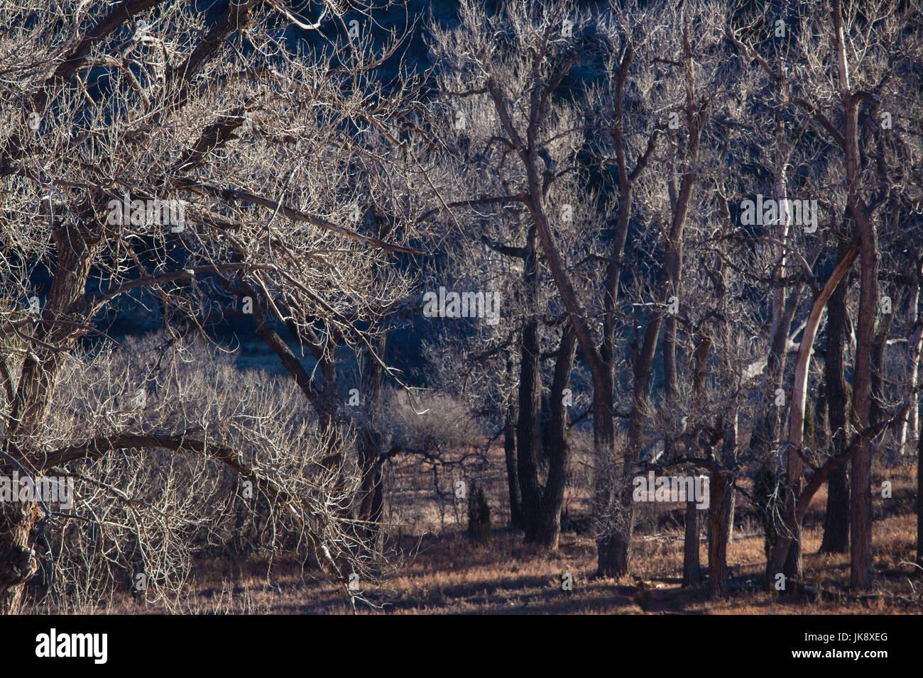 USA, Colorado, Colorado Springs, Garden of the Gods, trees, winter - Stock Image