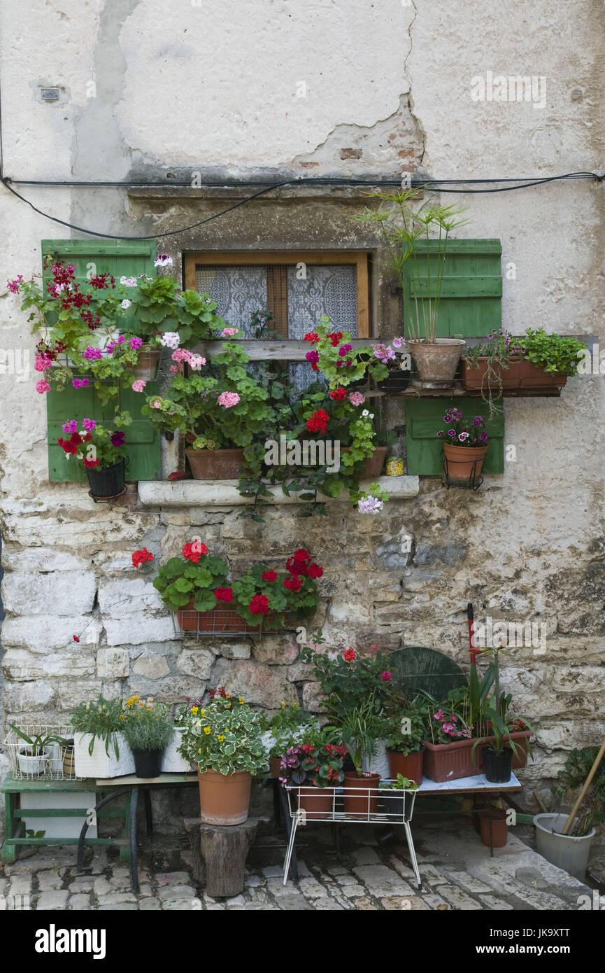 Kroatien, Istrien, Rovinj, Fenster, Blumen, Montalbano Straße, - Stock Image