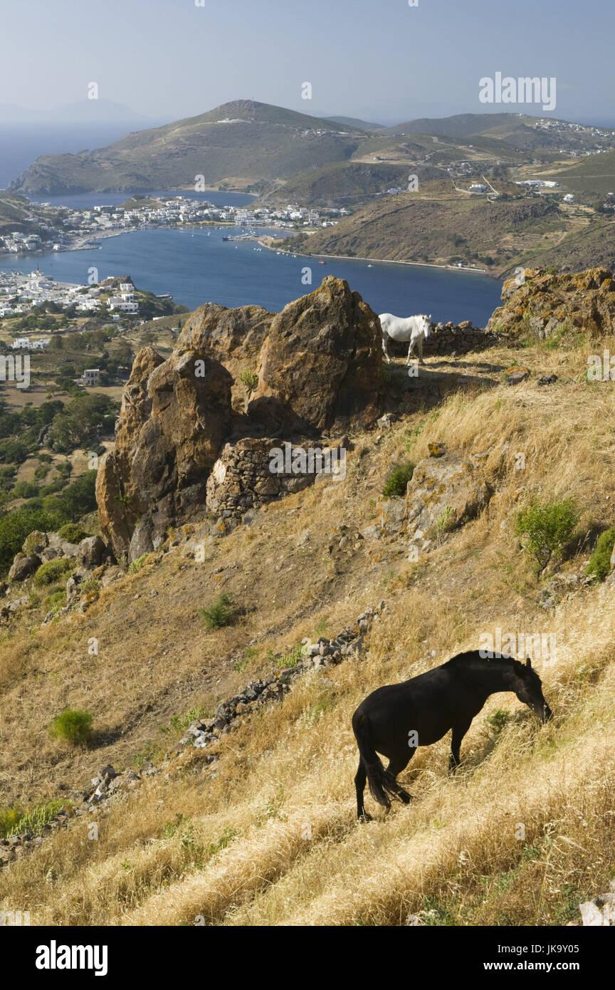 Griechenland, Patmos, Chora, Hügel, Wiese, Pferde, - Stock Image