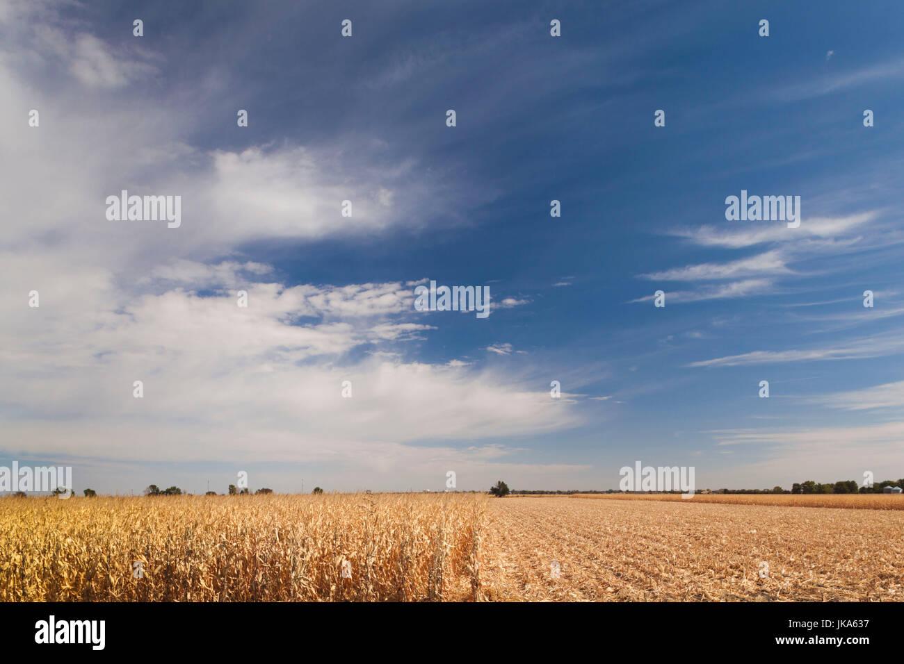 USA, Nebraska, North Platte, wheat field Stock Photo