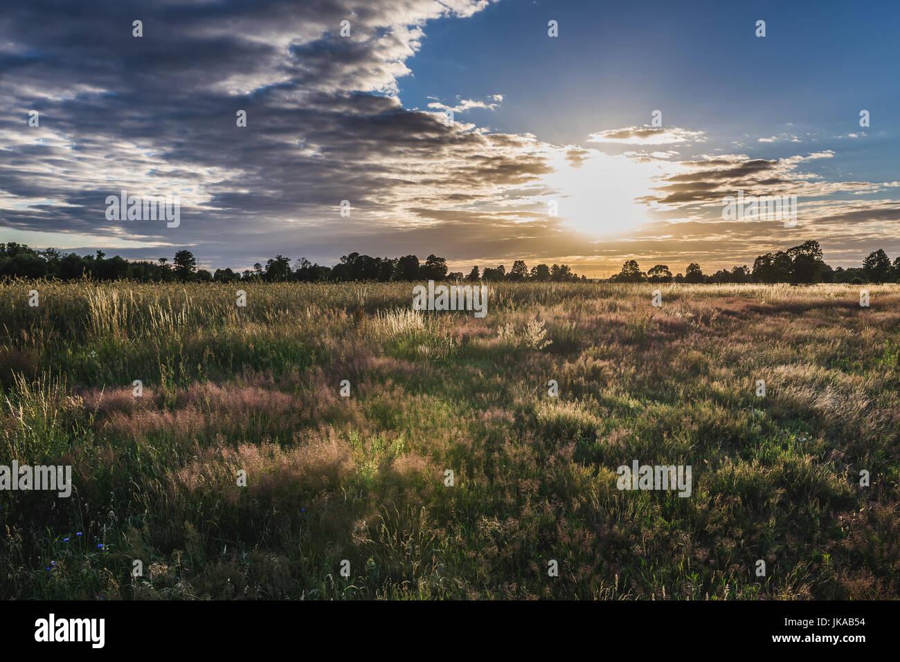 Meadow in Masovian Voivodeship of Poland - Stock Image