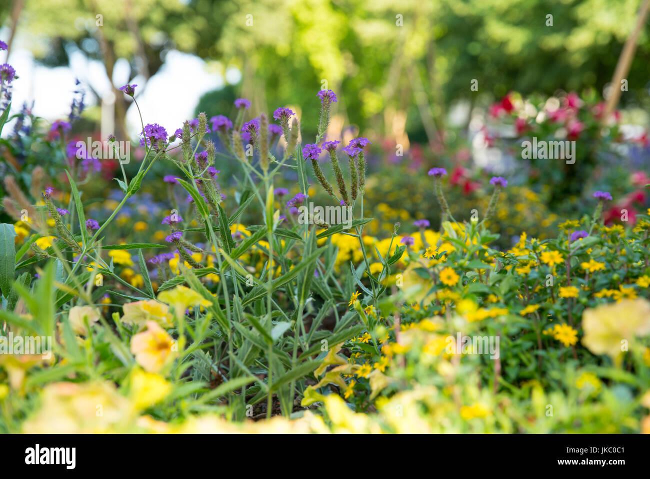 blooming flowers in Volkpark, Mainz ,Germny - Stock Image