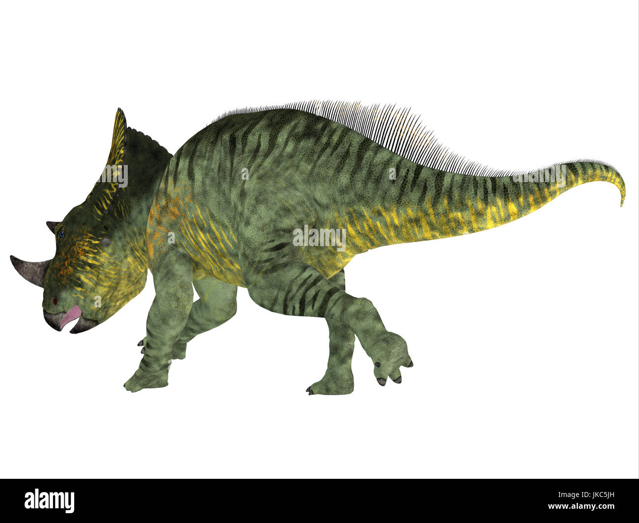 Brachyceratops is a herbivorous Ceratopsian dinosaur that lived in Alberta, Canada and Montana, USA in the Cretaceous - Stock Image