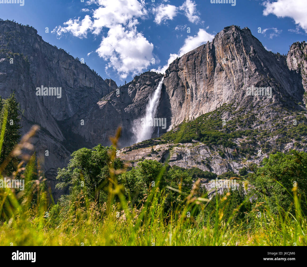 Tall grass is blurred in the foreground with the majestic view of Yosemite Falls in the background - Stock Image