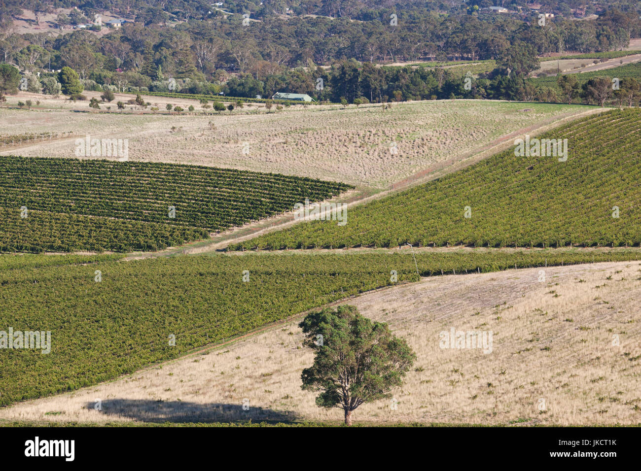Australia, South Australia, Clare Valley, Clare, elevated view of vineyards from Quarry Hill, morning - Stock Image