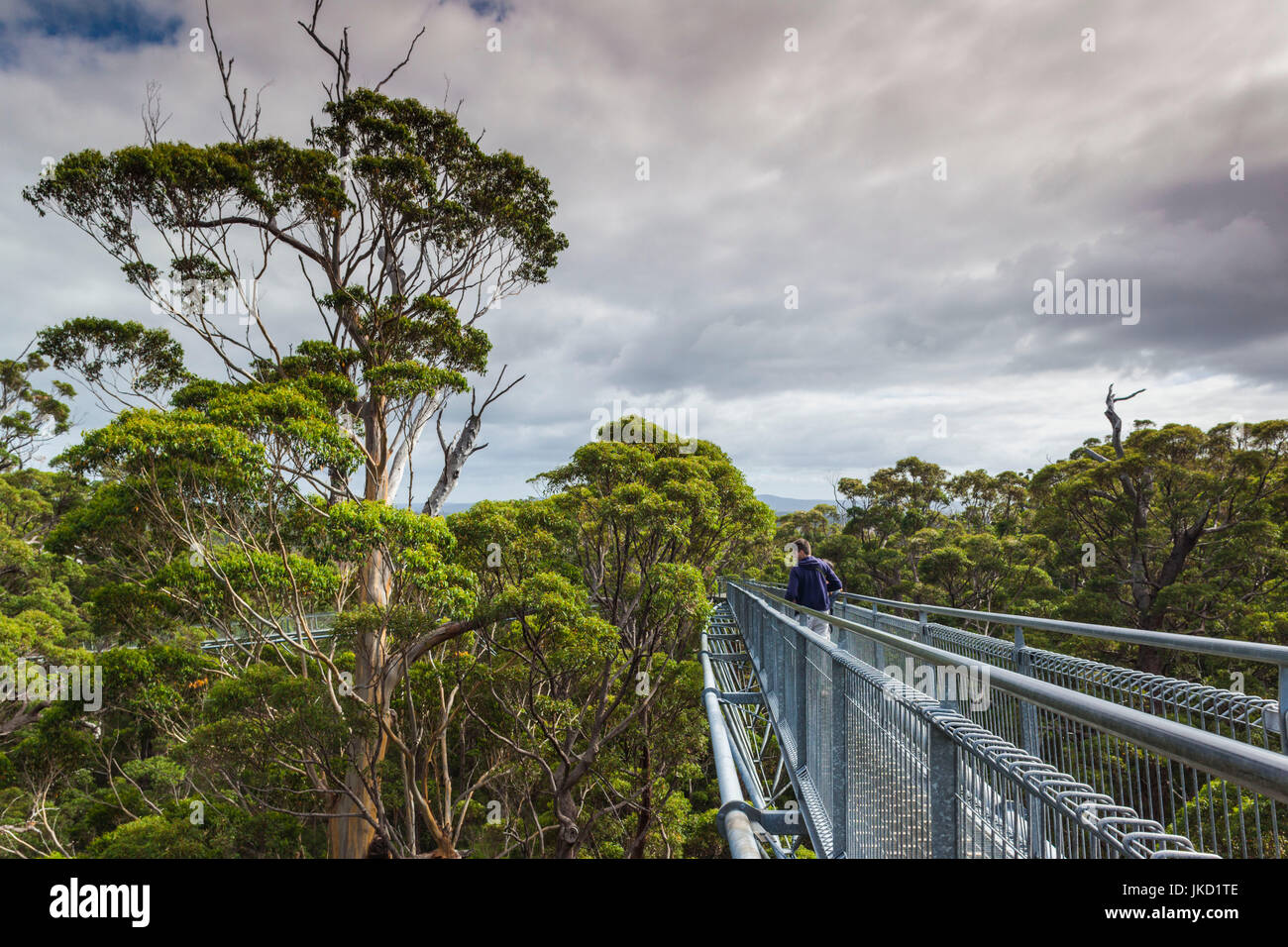 Australia, Western Australia, The Southwest, Walpole-Nornalup, Valley of the Giants Tree Top Walk, walkway above - Stock Image