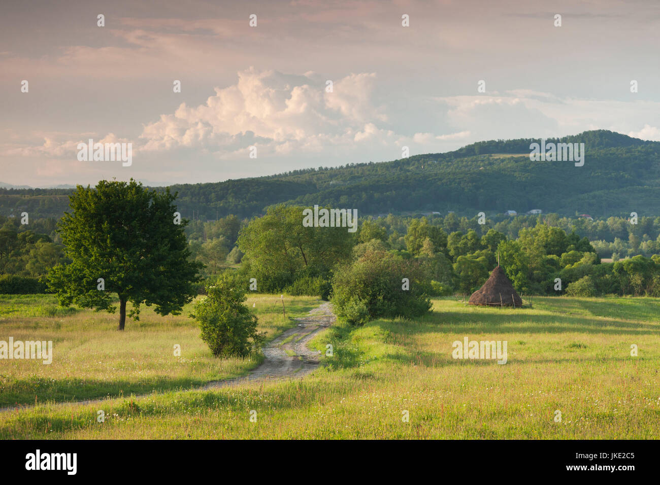 Romania, Maramures Region, Sarasau, country road by the Ukranian frontier, late afternoon - Stock Image