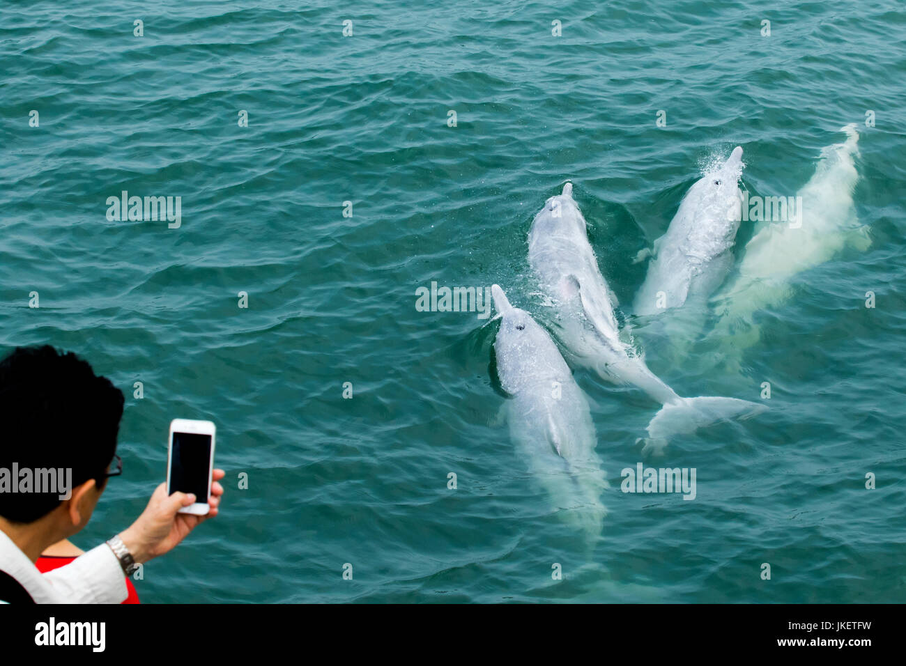 Dolphin watchers watching Indo-Pacific Humpback Dolphins (Sousa chinensis) in Hong Kong. - Stock Image