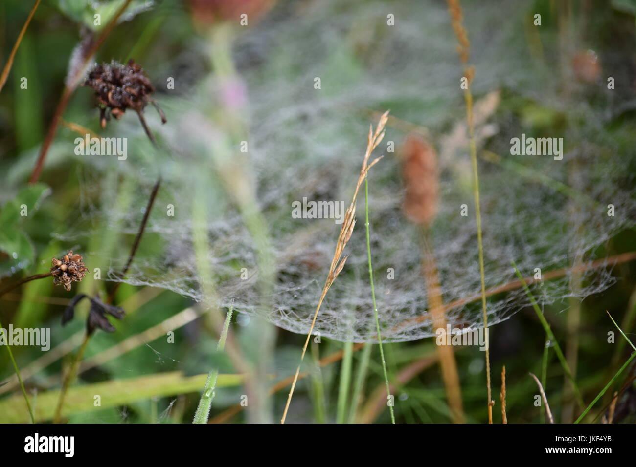 Spider web on scrub land - Stock Image
