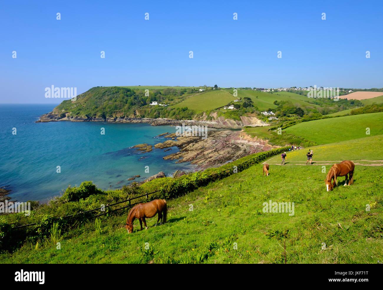 Pferde und Küstenpfad, Talland Bay nahe Polperro, Cornwall, England, Großbritannien - Stock Image