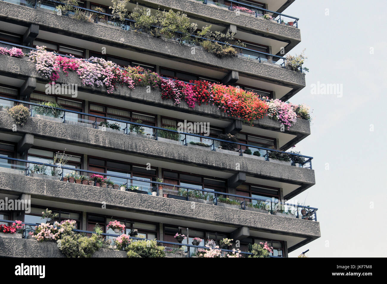 Rows of colourful balcony plants geraniums growing in gardens outside Barbican Estate flats in The City of London - Stock Image