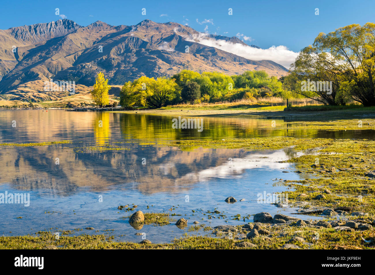 New Zealand, South Island, Gledhu Bay at Lake Wanaka - Stock Image