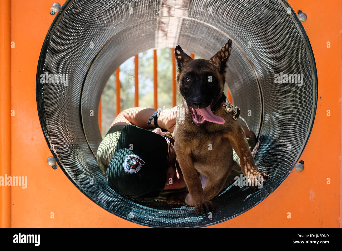 Efrat, West Bank. 23rd July, 2017. A handler from the Israel Dog Unit, IDU, a non profit canine unit, playfully - Stock Image