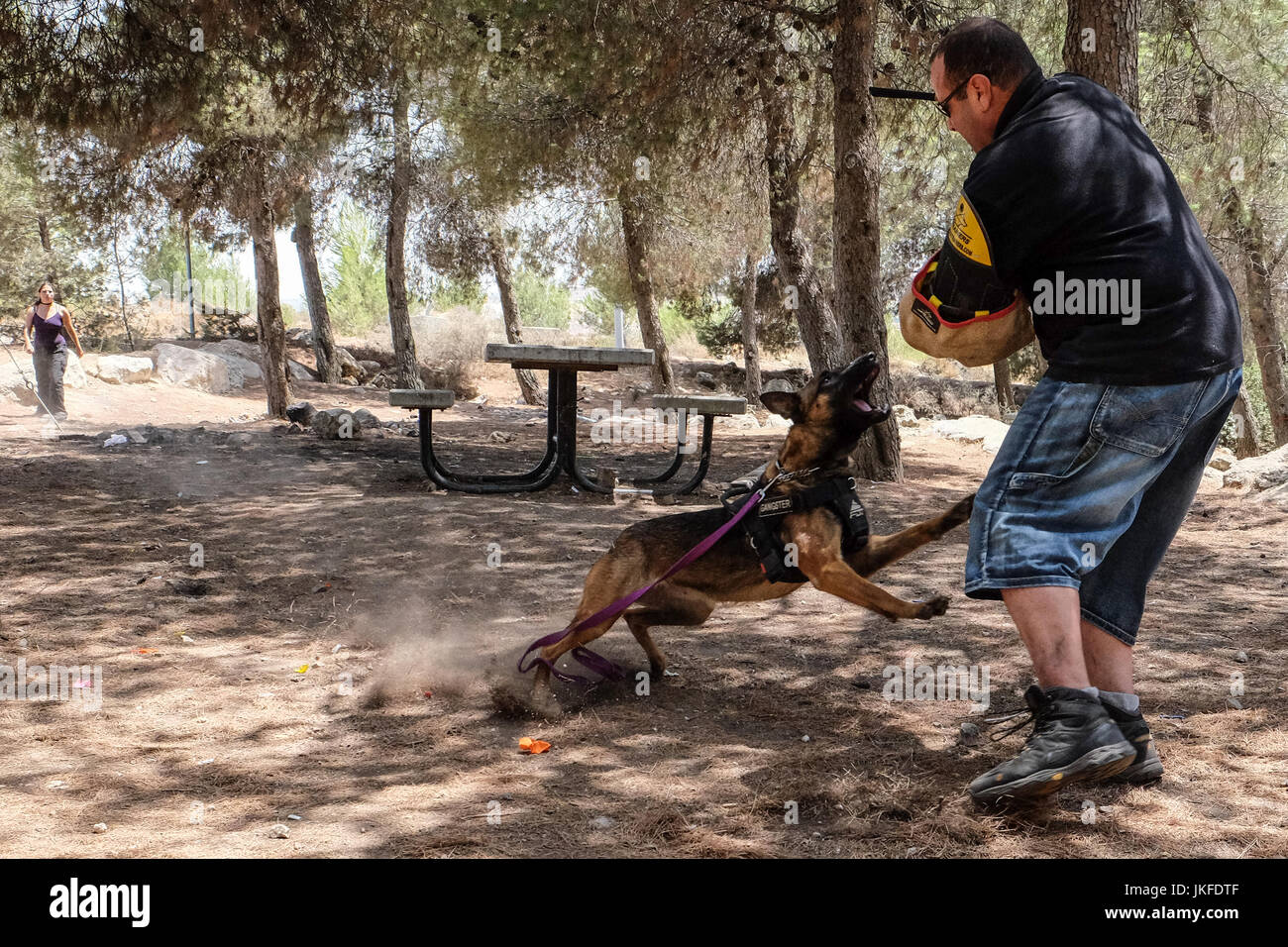 Efrat, West Bank. 23rd July, 2017. The Israel Dog Unit, IDU, a non profit canine unit, trains dogs for life saving - Stock Image