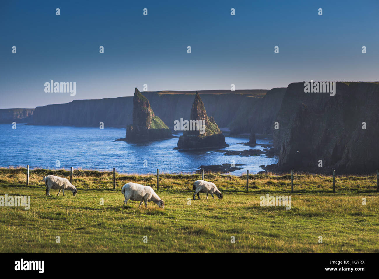 Stacks of Duncansby at Duncansby Head - Stock Image