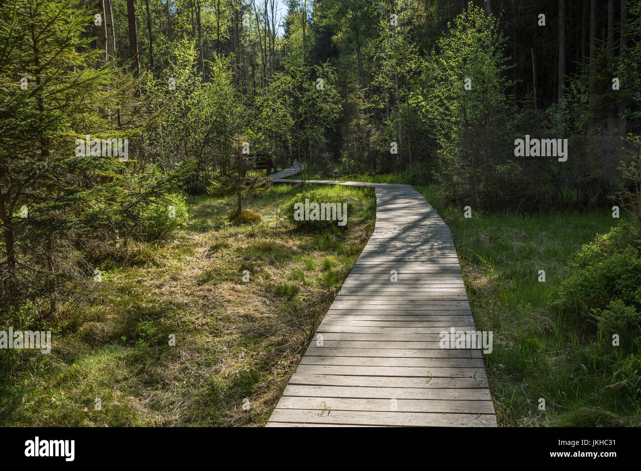 Forest Path in Bohemia Czech Republic - Stock Image