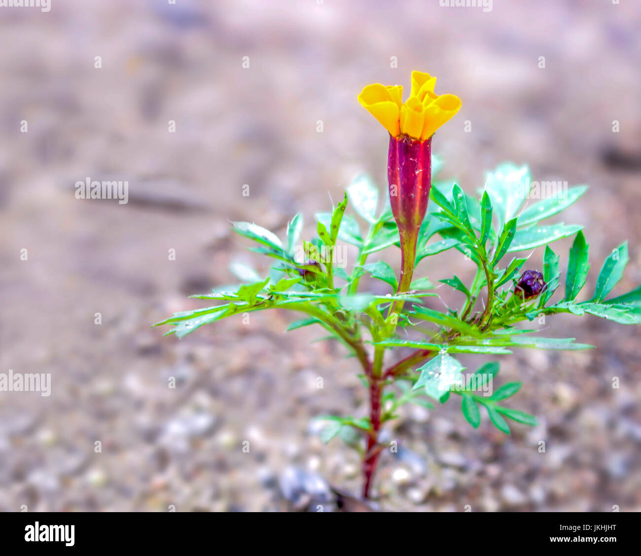 Flower with generous copy space - Stock Image