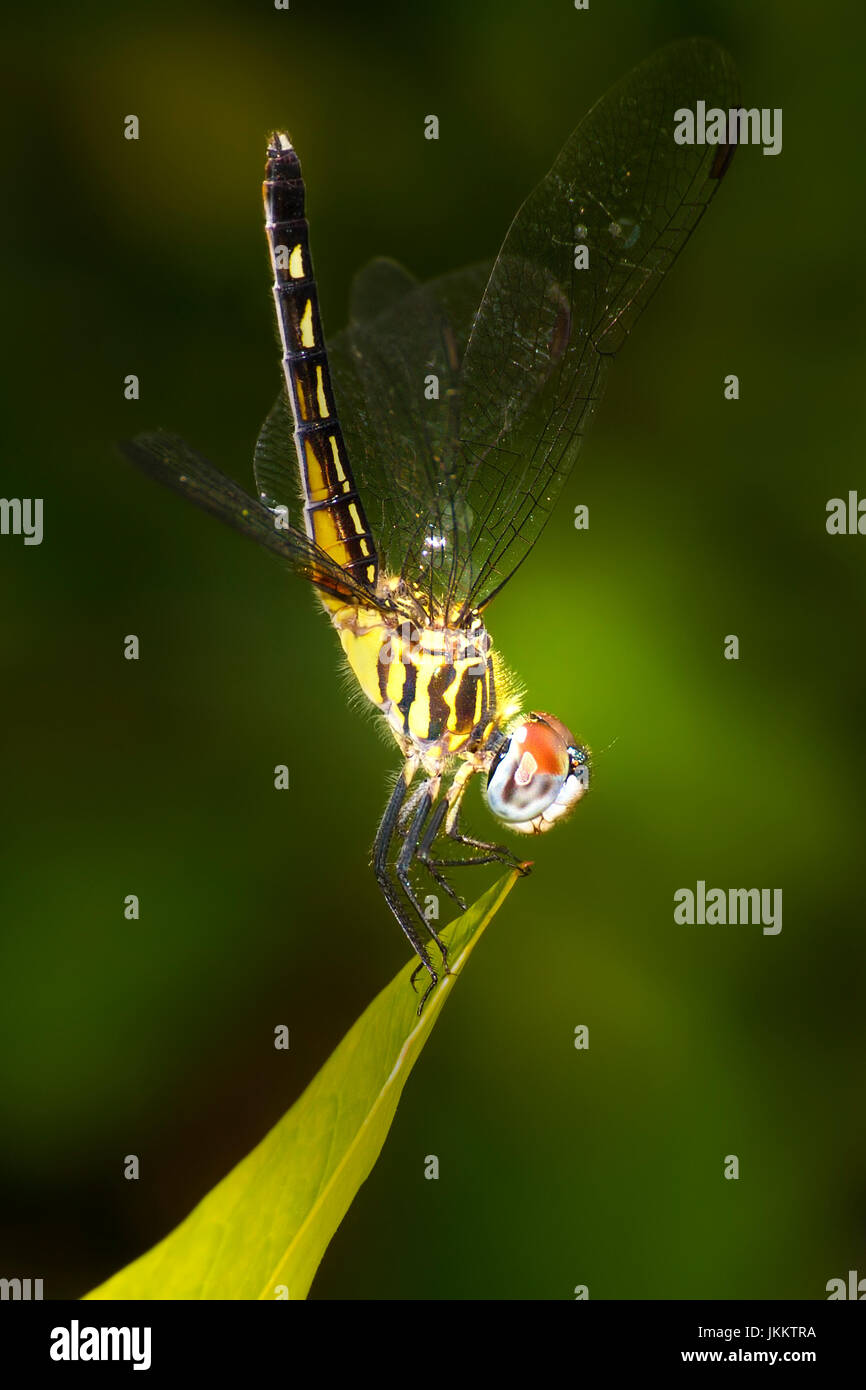 Dragonfly Home High Resolution Stock Photography And Images Alamy