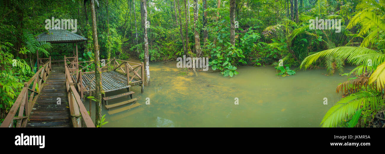 Panorama view of a wooden pavilion surrounded by intimate lush green rainforest trees, in the midst of a peaceful Stock Photo