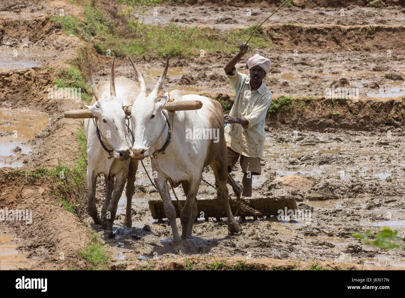 Indian Plougher - Stock Image