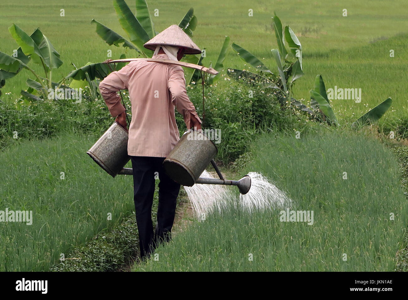People working in the rica paddies near Sapa northern Vietnam - Stock Image