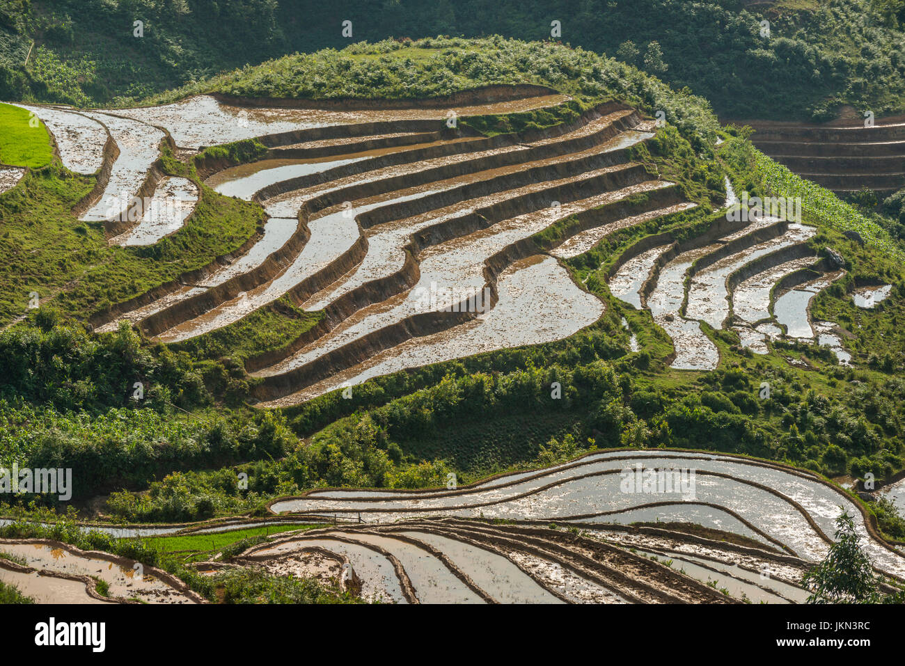 Scenic view of Rice paddies near Sapa, northern Vietnam. - Stock Image