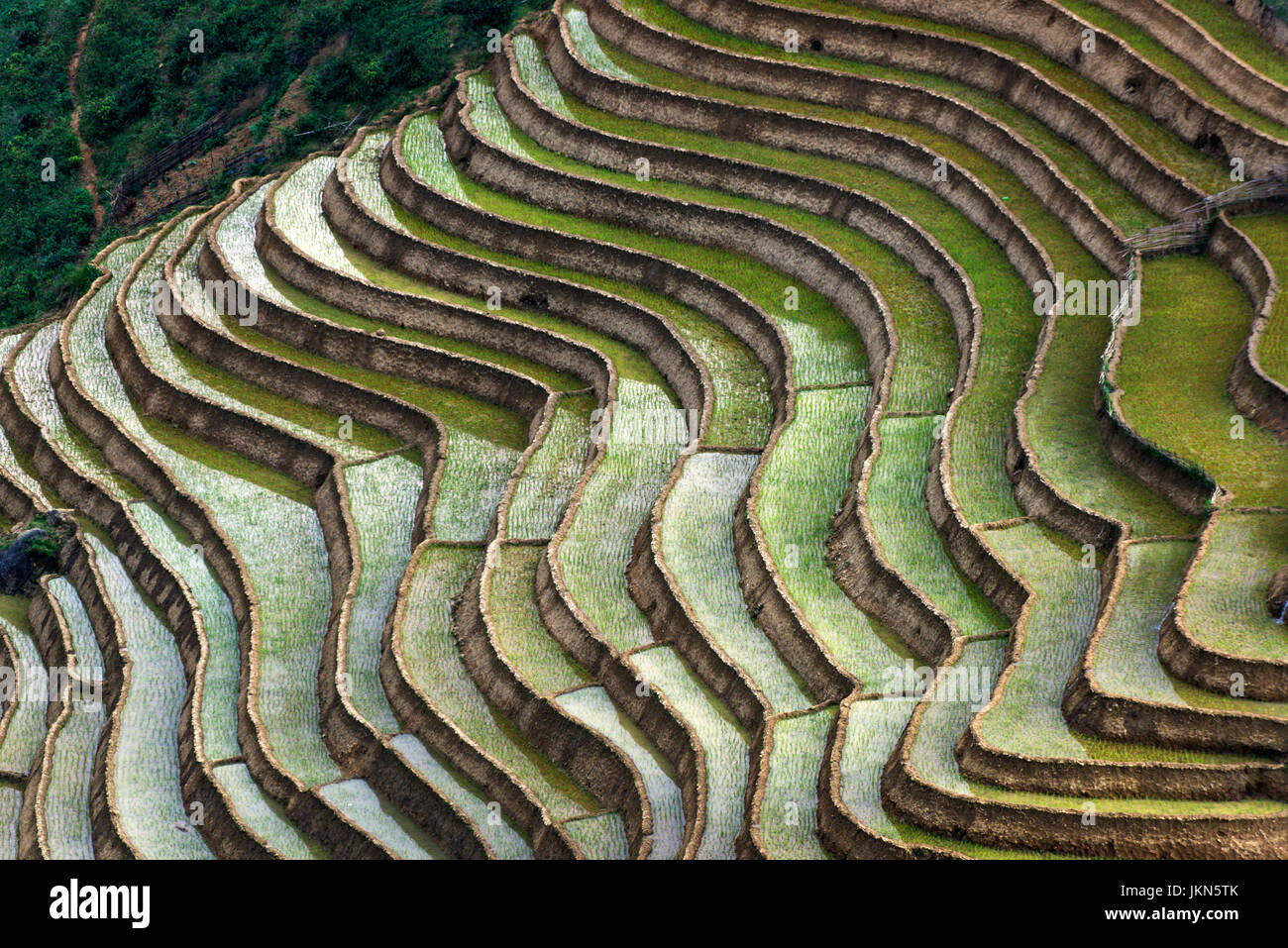Scenic view of Rice paddies near Sapa, northern Vietnam. - Stock Image