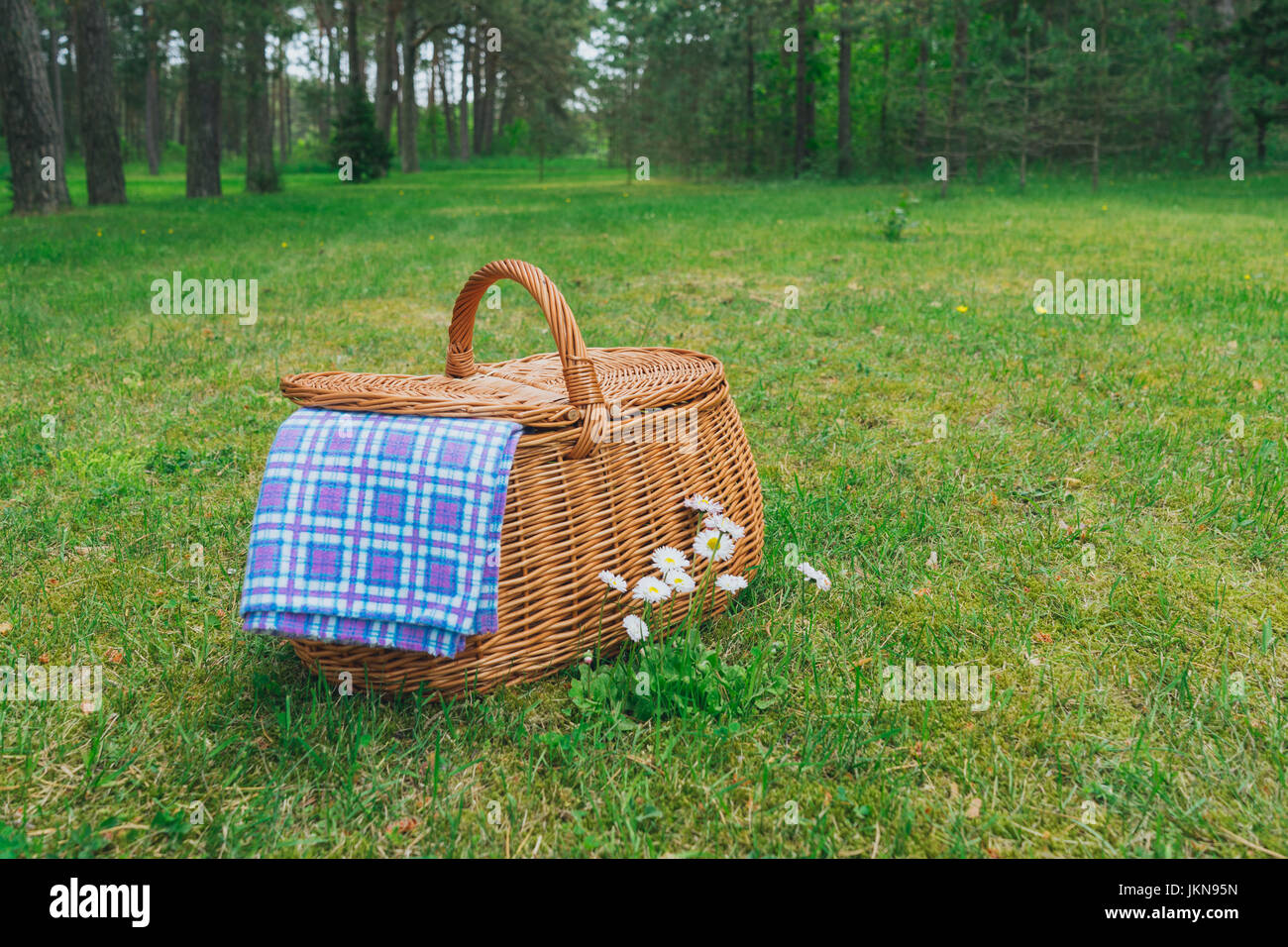 Picnic basket and blue white checkered napkin on lawn with daisy flowers. Forest on background. Weekend break concept - Stock Image