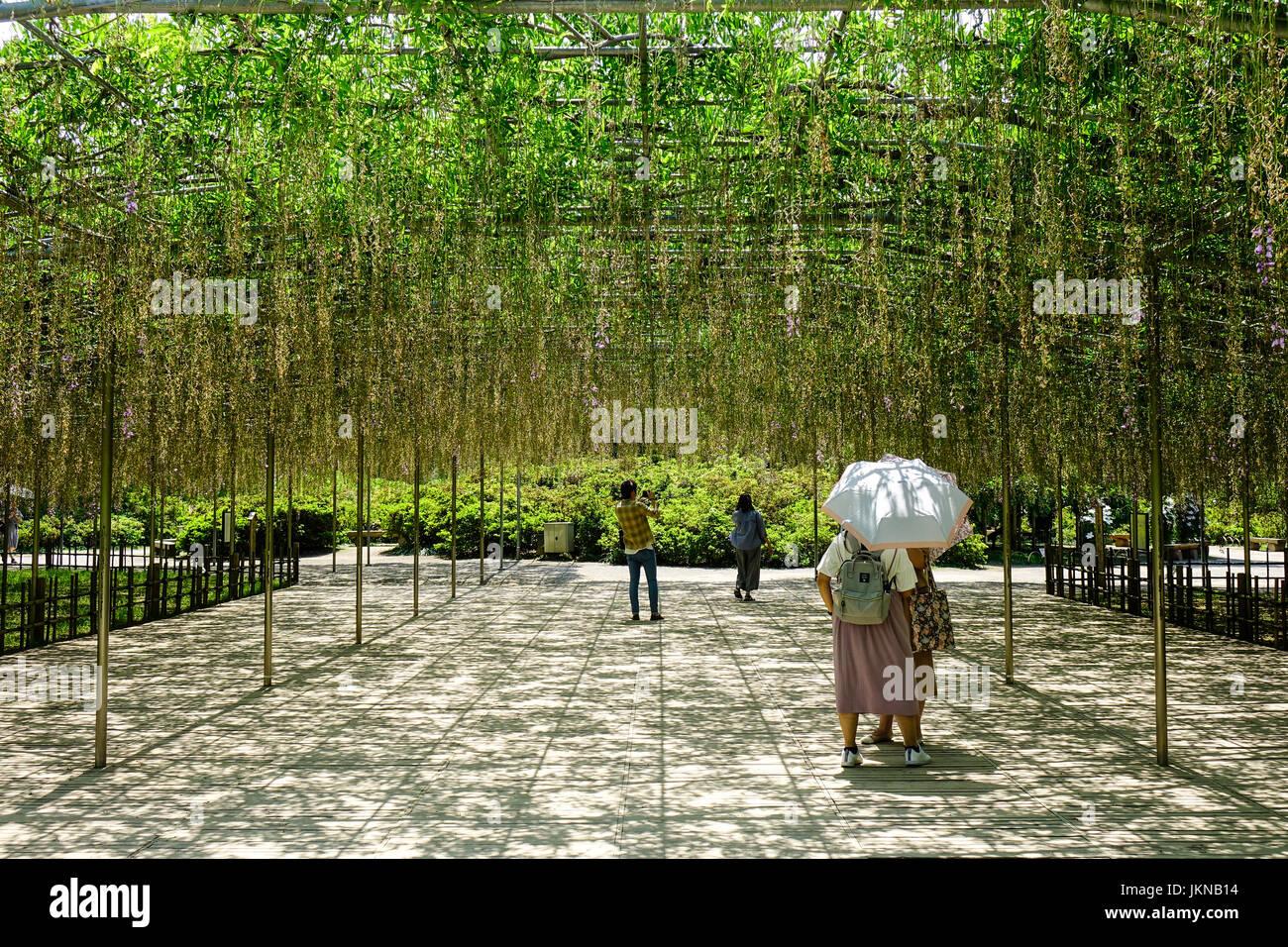 Ashikaga, Japan - May 20, 2017. People walking at wisteria garden at Ashikaga Flower Park in sunny day. The park - Stock Image