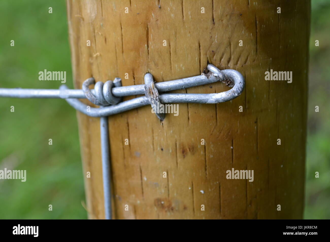 Close up of galvanised wire fence stapled to timber wood post upright re fencing fastening - Stock Image