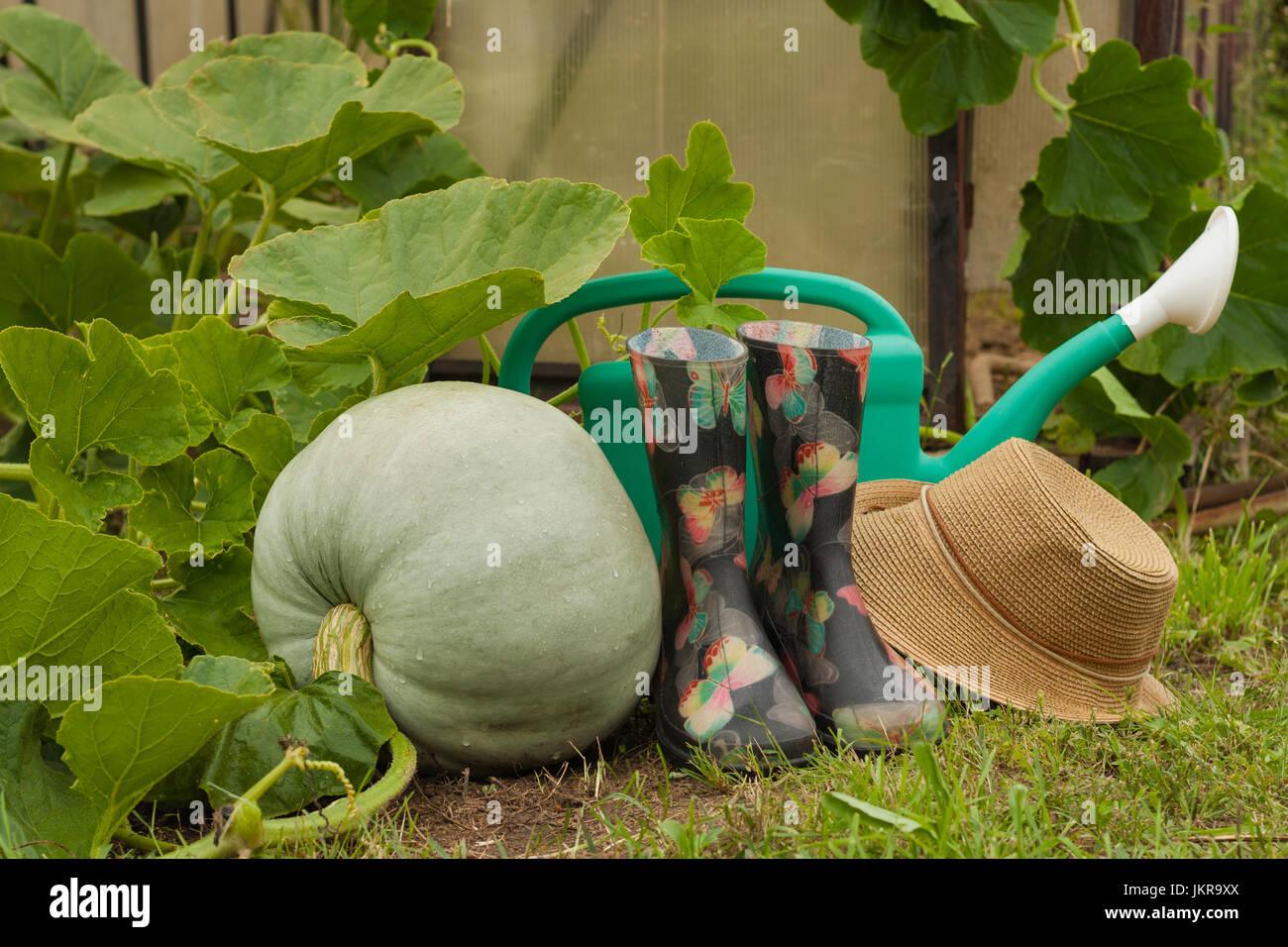 Fresh Pumpkin And Garden Tools On Vegetable Garden Fresh Pumpkin