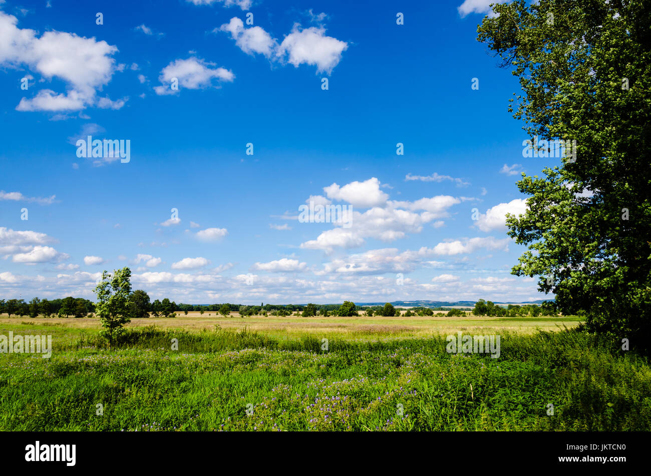 Beautiful Czech rural meadow with dark blue sky and white clouds. - Stock Image