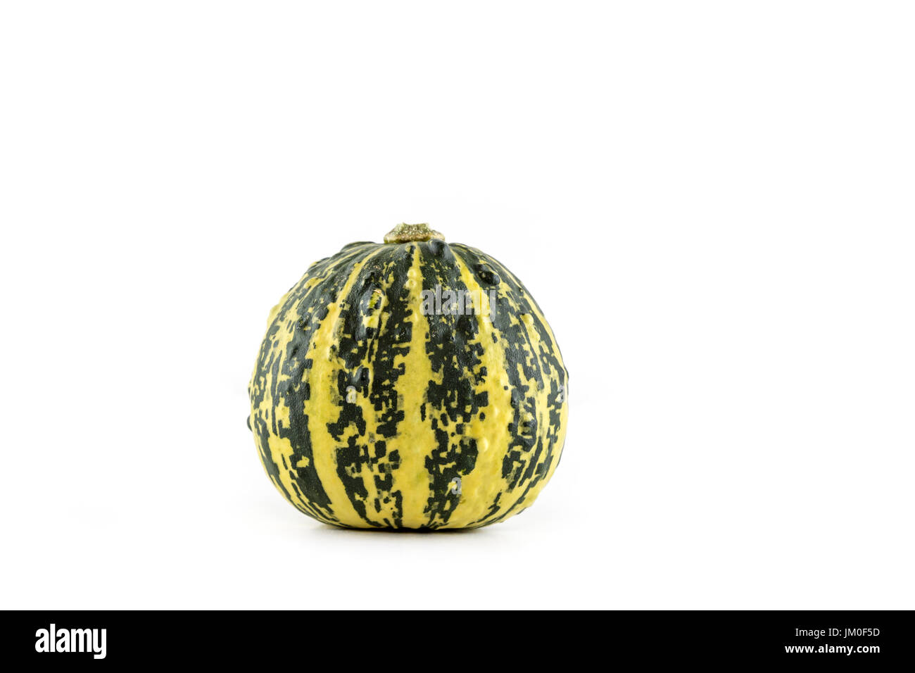 A single pumpkin (Italian Stripe) lies in front of a white background as a Cut-Outs - Stock Image